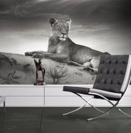 fotótapéta oroszlánnal